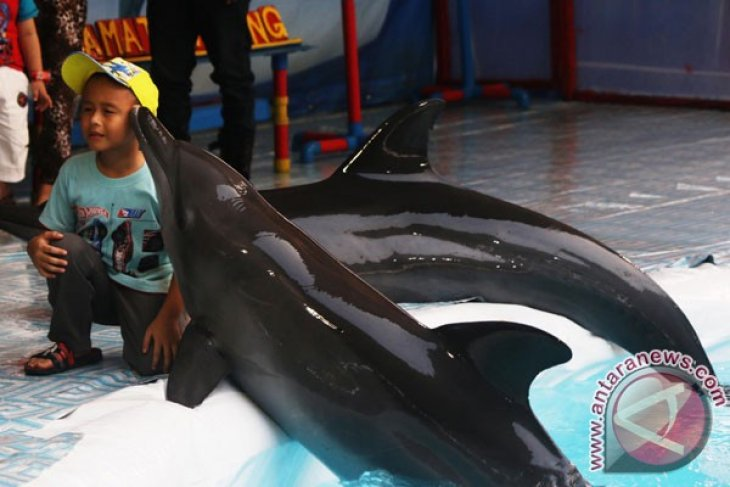 Indonesian environment minister concerned about dolphin show in Bali
