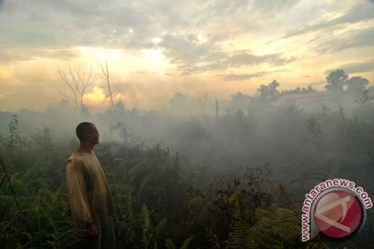 Aalhi calls for tighter control of peat land restoration process