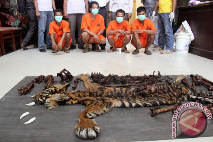 Three residents arrested on tiger hunting charges