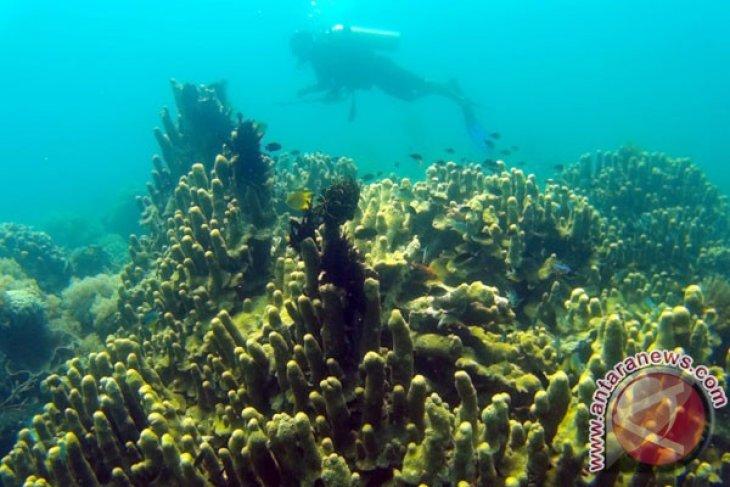 Year Ender - Preserving coral reefs means protecting livelihoods in coastal region by Fardah Assegaf