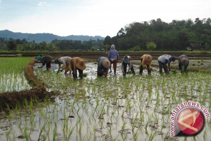Tanah Bumbu Target Food Self-Sufficiency