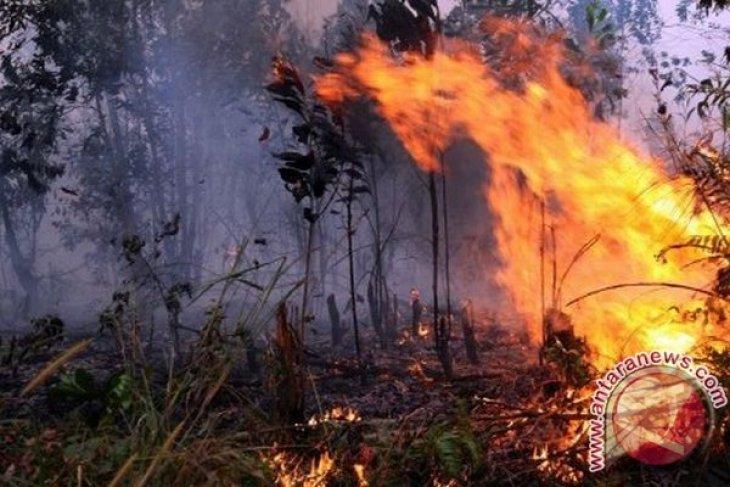 Berkas tersangka kebakaran hutan dilimpahkan ke jaksa