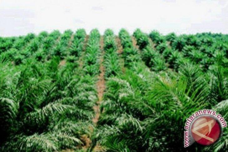 KPK dorong evaluasi izin perkebunan sawit di Provinsi Papua Barat
