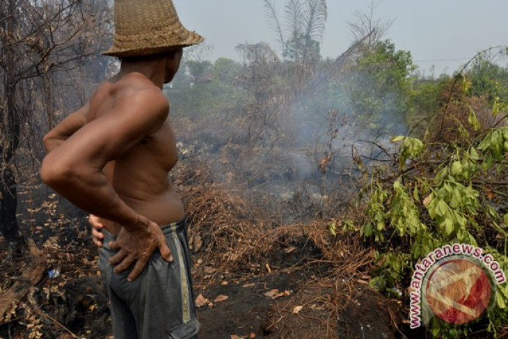 Agency to restore over 800 thousand hectares of peatland areas