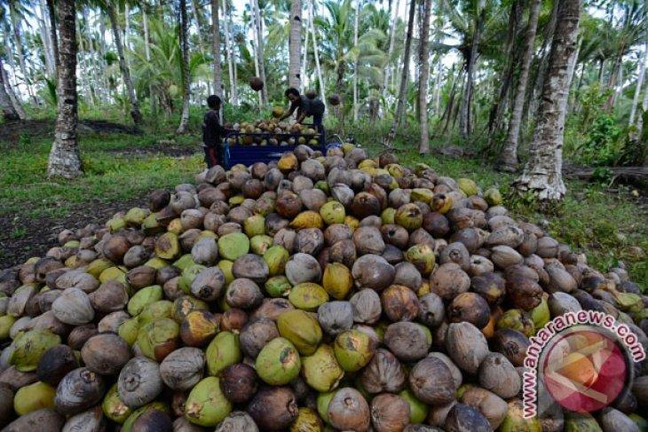 North Maluku seeks to revive copra exports