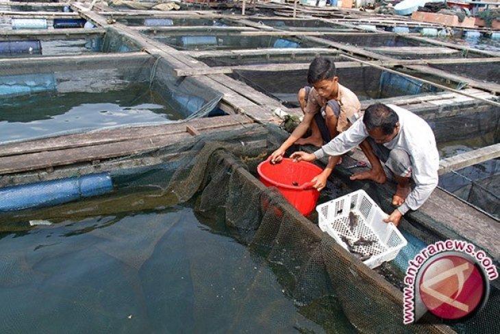 Investor Siap Kembangkan Perikanan Bangka Barat