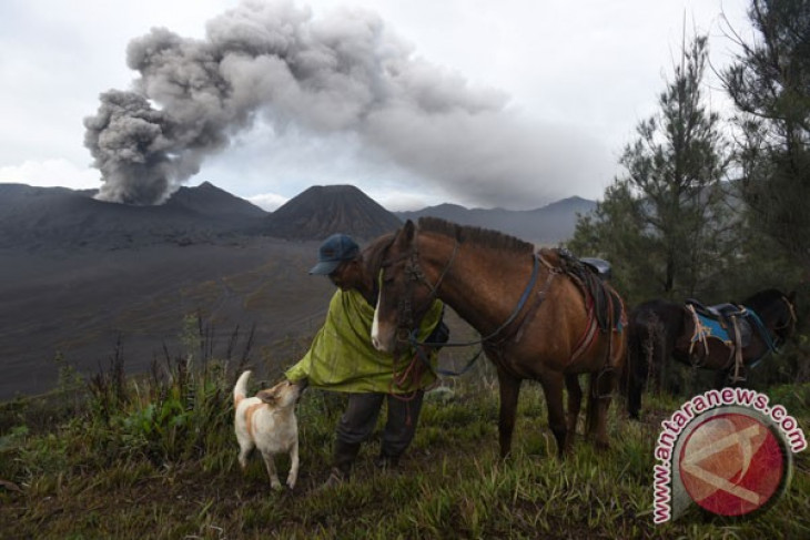 Mt Bromo eruption affects wide range of Probolinggo`s agricultural lands