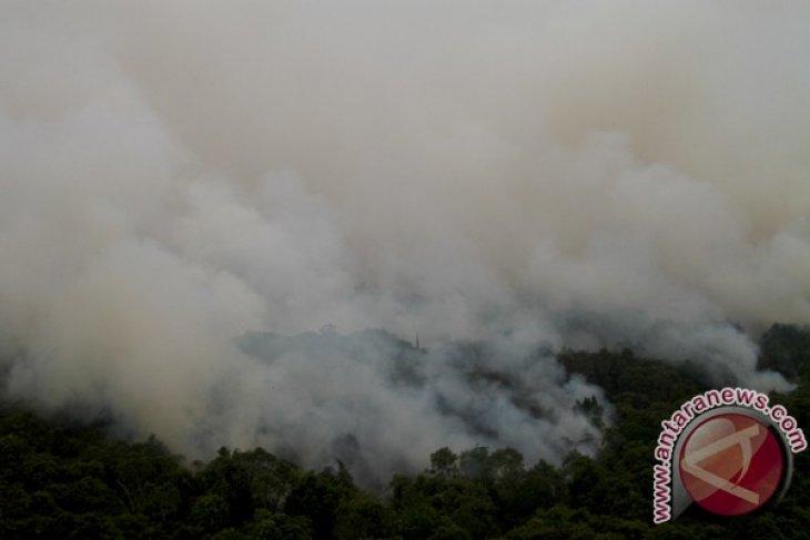 130 hektare kawasan hutan Bangka Tengah rusak terbakar