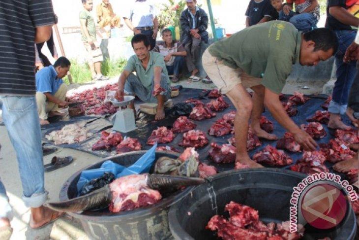 Tradisi 'Marbinda Horbo' Akhir Tahun Di Tapanuli Utara