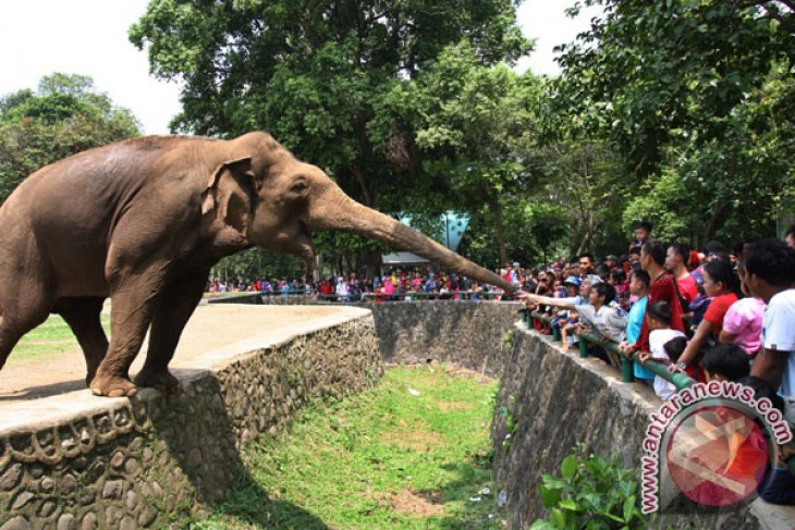 Asian Games (sideline events) - Ragunan Zoo emerges as popular place to visit