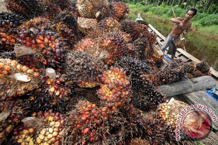 CPO price in Jambi records rise of Rp133 per kilogram