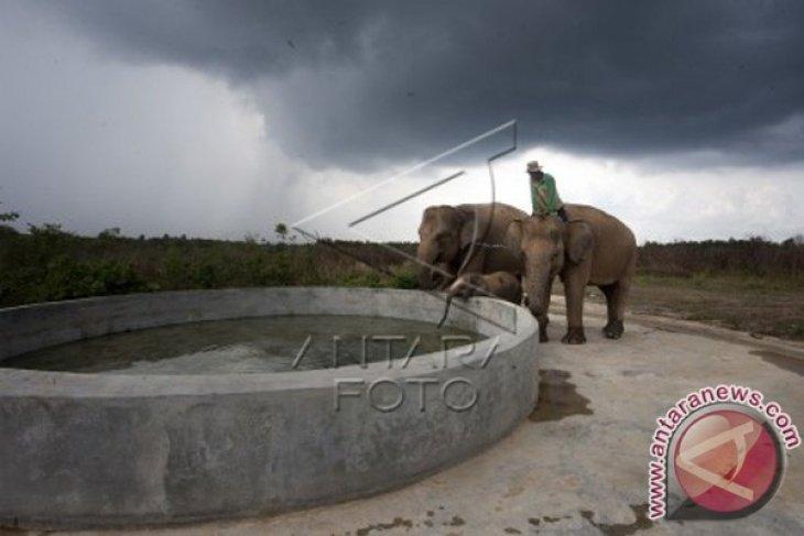 Way Kambas National Park Home To 247 Elephants