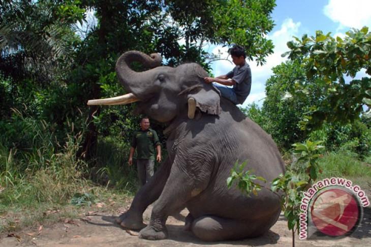 Marauding elephants kill one person, destroy crops in North Tanzania