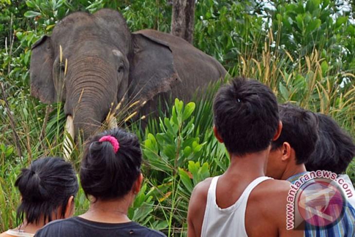 EARTH WIRE -- Four Sumatran elephants died in Riau in 2016: WWF