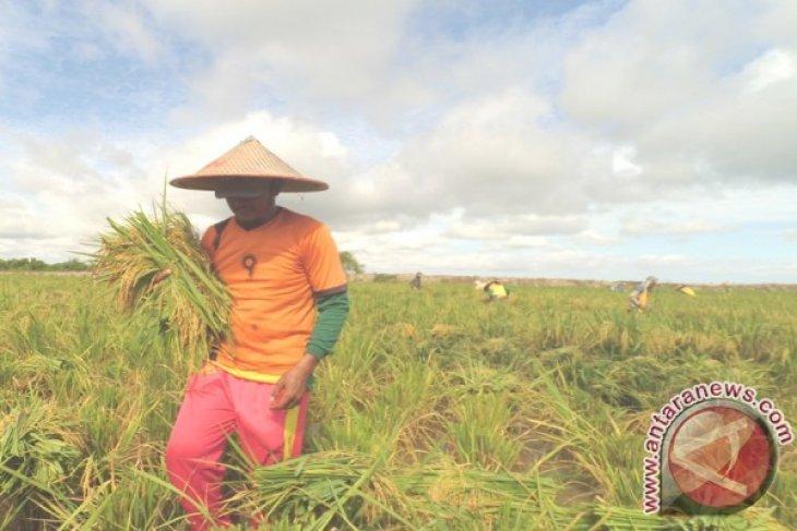 Lahan Binaan Pupuk Indonesia di Ketapang Capai 7 Ton/Hektare