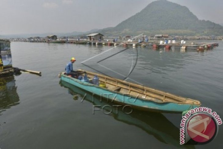 PJT II: Kualitas air waduk Jatiluhur menurun