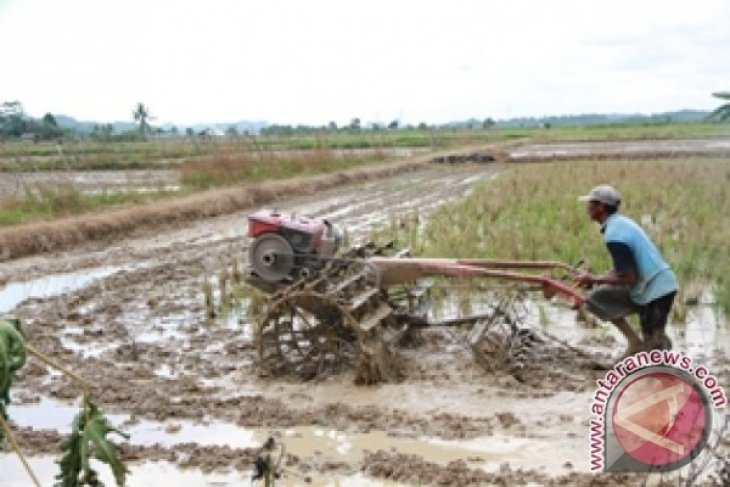 Pemkab Penajam manfaatkan lahan rawa untuk pertanian