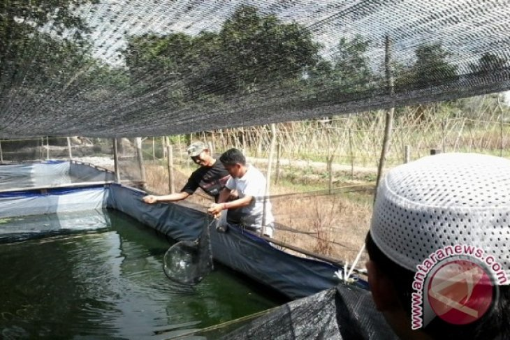 Pengusaha diharapkan bantu peternak ikan lele Kaltim