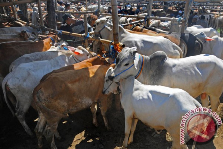 C. Java self-sufficient in beef with growing livestock population