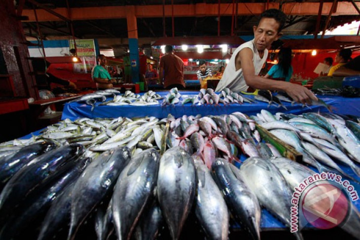 Fish industry should not be concentrated in Java: Kadin