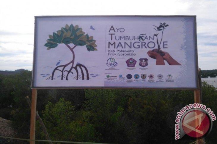 Oase Kabinet Tanam Mangrove di Pohuwato