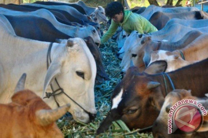 Pemkab Karawang sebar hewan kurban ke pesisir
