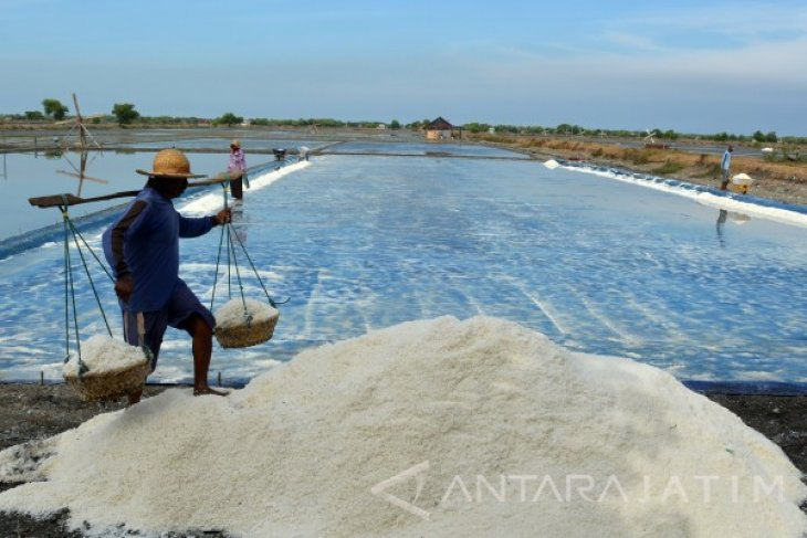 Ministry of Industry encourages production of salt