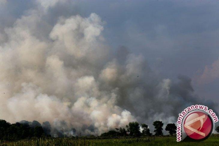 MUI : pembakaran lahan-hutan cerminkan krisis moral