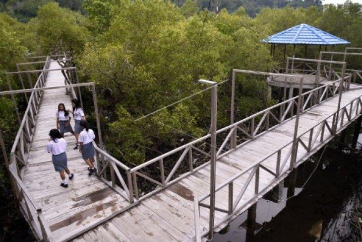 Suasana Mangrove di Tahuna