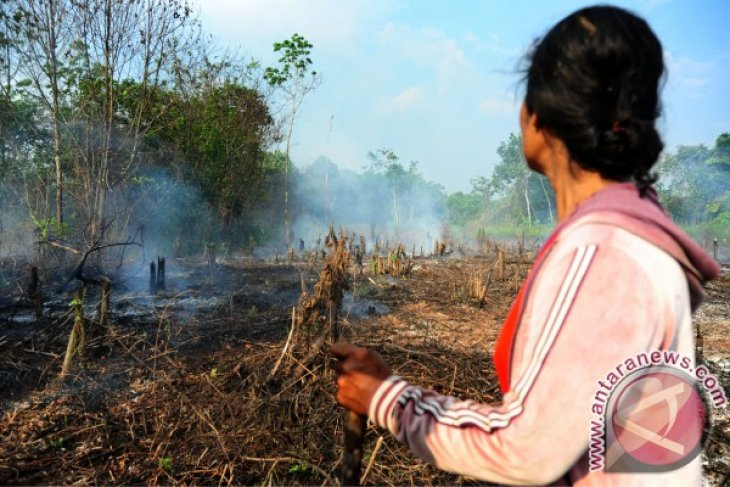 Ministry releases West Kalimantan's 6,901 ha of protected forest area
