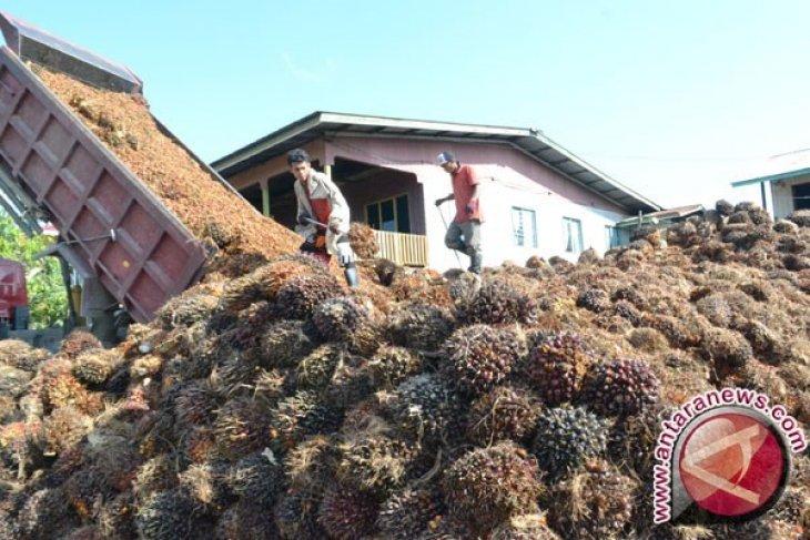 Indonesia promosi CPO ke Eropa