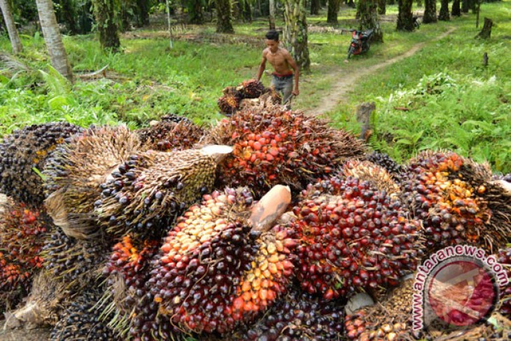 EARTH WIRE -- 527 palm oil companies apply for ISPO certificate
