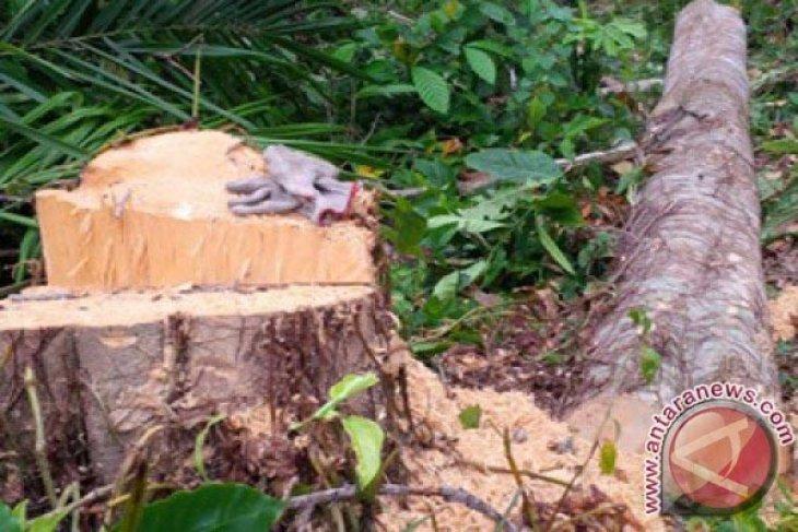 Di Karawang, Tebang Pohon Sembarangan Denda Rp5 Juta