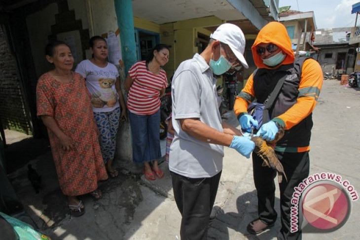 FAO warns livestock farmers of new bird flu virus