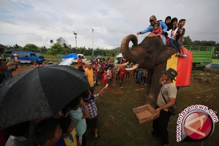 Bengkulu percontohan pembangunan koridor gajah Sumatera