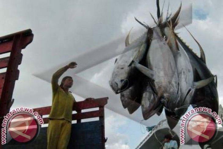 Ekspor Ikan Tuna Bali Naik 20,55 Persen