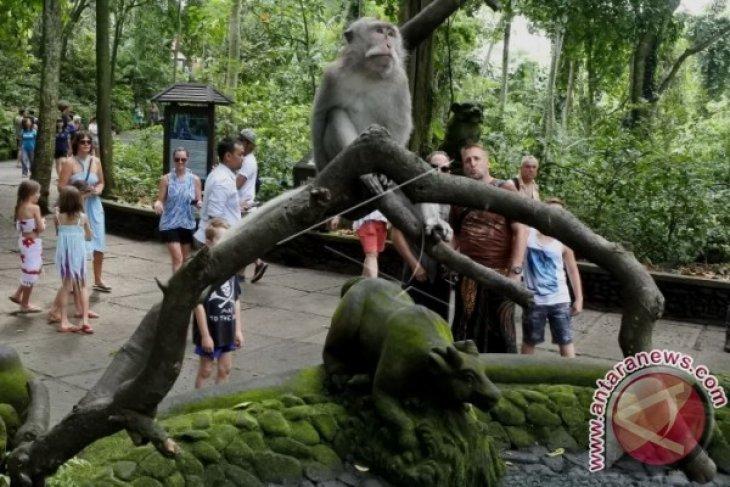 Belanja Makanan Monyet