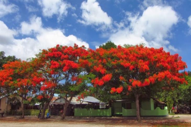Making Kupang city a flamboyant tourist area
