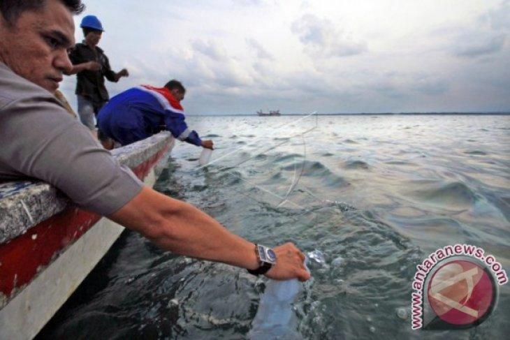 Pencemaran minyak pantai Pusong ganggu biota laut