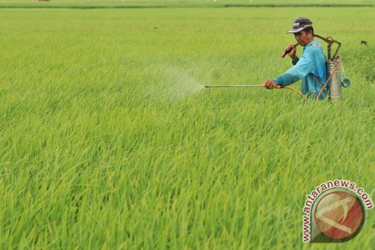 Bulog targets cultivating paddy on one million hectares of land