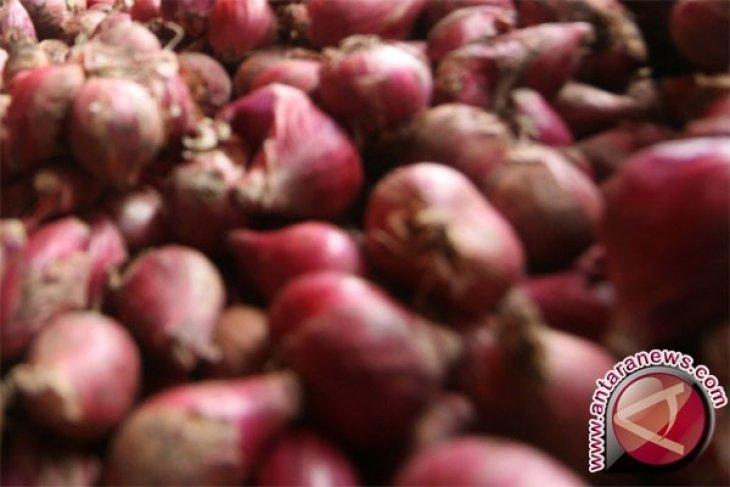 Ramuan bawang merah untuk obati asma