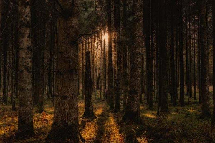 Kalbar Bentuk Sekretariat Bersama Pengelolaan Kawasan Konservasi