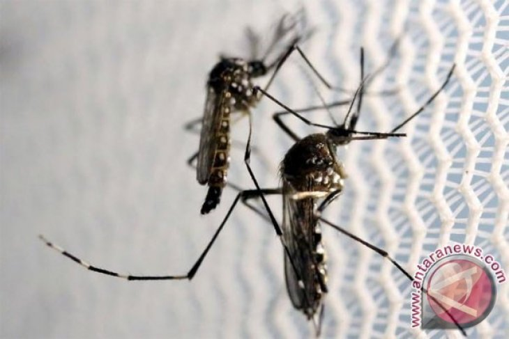 RI devises mosquito infertility technology to curb dengue fever