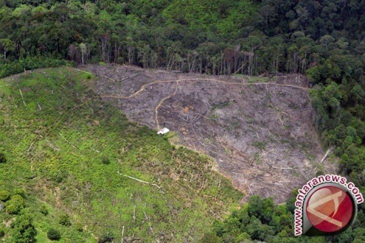 Habitat Hewan Sumatera Makin Berkurang