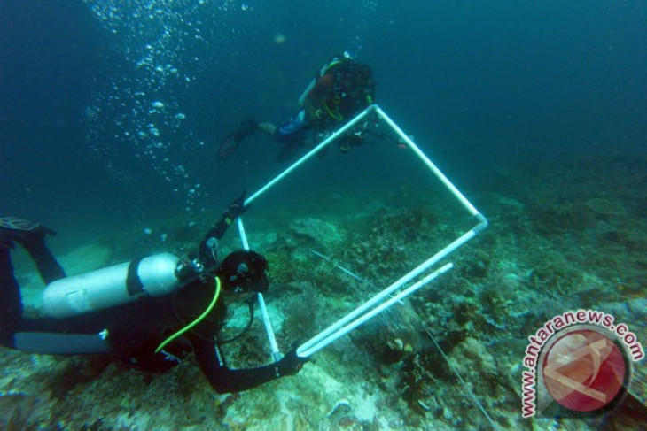 EARTH WIRE -- Coral reef destruction during recent shipwreck hurting Raja Ampat tourism
