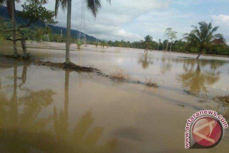 Puluhan Hektare Sawah Tapsel Tergenang  Air dan Lumpur