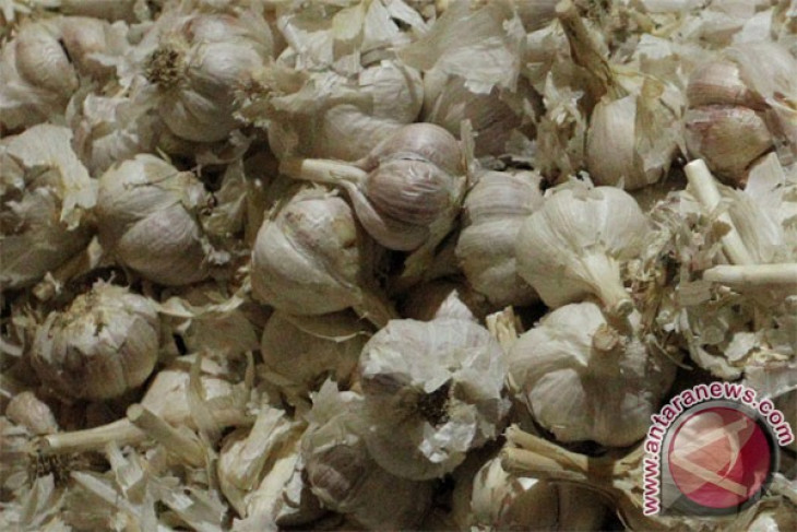 Government successfully lowers garlic prices