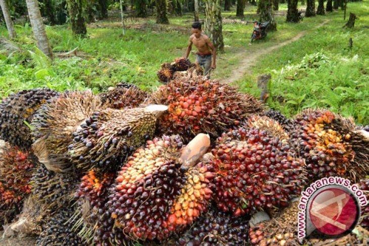 Harga kelapa sawit anjlok di Aceh, ini pendapat Gapki