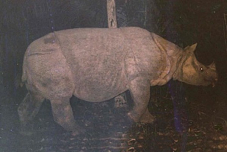 Indonesia on rhino emergency status