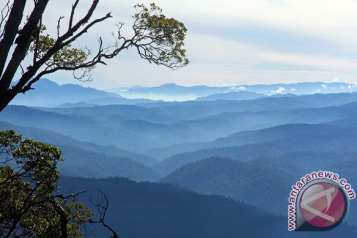Appeal to protect Leuser ecosystem